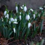 ISTORIA ZILEI: Evenimente din 8 martie, calendar istoric si religios, aniversari vedete