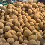 """TRAFIC DE… CARTOFI – Explozia preturilor la produsele agroalimentare a creat """"piata neagra a cartofului alb"""" (VIDEO)"""