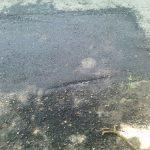 CITITORII IN ACTIUNE – Plombe turnate peste marcajele stradale proaspat trasate, pe strada George Cosbuc din Baia Mare