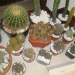 EXPOZITIE – Colectie de timbre vechi de 50 de ani, printre cactusii expusi la Galeria Millennium II Baia Mare (VIDEO)