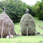 SUBVENTII – 3 milioane de euro incasati de agricultori din Maramures prin falsuri pe propria raspundere