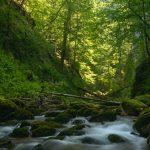 ECOLOGIE – WWF Romania vrea sa salveze raurile de munte din calea distrugerilor cauzate de microhidrocentrale (VIDEO)