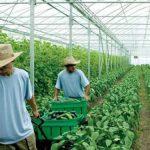 MUNCA – ZILIERI – Muncitorii cu ziua sunt la mare cautare in Maramures (VIDEO)