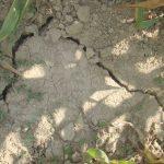 CONSTIENTIZARE – Ziua mondiala pentru combaterea desertificarii si a secetei