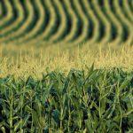 AGRO-METEO – Rezerva de apa din solul agricol, optima in majoritatea regiunilor agricole pana pe 12 iunie
