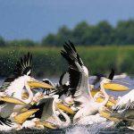 STUDIU – Stocurile de peste din Delta Dunarii ar putea fi afectate de schimbarile climatice