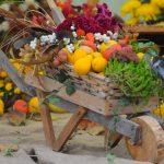 EXPO FLORA – Paradisul florilor s-a mutat in Piata Revolutiei. Baimarenii sunt asteptati de catre comercianti din intreaga tara cu plante, arbori, arbusti si pomi fructiferi, dar si obiecte decorative la preturi mici (VIDEO si GALERIE FOTO)