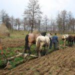 SUBVENTII NECUVENITE – APIA a demarat procedura de recuperare a debitelor de la 371 de fermieri maramureseni care au incasat plati necuvenite