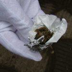 CAMPANIE – Program de preventie a consumului de droguri in Maramures. In ultimele cinci luni tot mai multi copii au fost depistati ca fiind consumatori de droguri usoare (VIDEO)