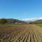 ANM – Aprovizionarea cu apa in cultura graului de toamna, in limite apropiate de optim in perioada 22-28 noiembrie