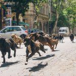 """FILM – """"Orasul cainilor"""", propunerea Ungariei la Oscar, in cinematografele din Romania din februarie 2015"""
