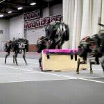TEHNOLOGIE – Un ghepard-robot conceput in Statele Unite sare peste obstacole