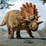 INEDIT – A fost descoperita o noua specie de dinozaur cu coarne