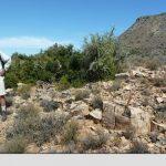 TEORIE – Acum 260 de milioane de ani s-a produs inca un fenomen de disparitie in masa