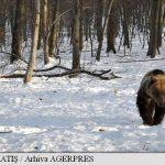 DEZAMAGIT – Un turist a cerut administratorilor parcului Yellowstone sa invete ursii sa stea acolo unde pot fi vazuti
