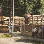 COLABORARE – ONG-urile se unesc impotriva taierilor ilegale si cer o mai buna administrare a padurilor in Romania si o reactie europeana pentru a opri comertul cu lemn ilegal