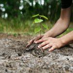 Jandarmii maramureşeni au plantat copaci în Munţii Maramureşului