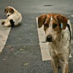 Municipalitatea Baia Sprie va avea adăpost pentru animale