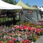 Tarifele la Expo-Flora mai mici decât anul trecut