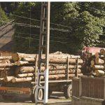 Din pădurile Maramureşului se fură  în continuare ca din codru