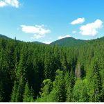 Termen limită! Cererile pentru compensaţiile financiare acordate proprietarilor de păduri din arii protejate se depun până la 30 septembrie