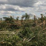 Pădurile Maramureşului doborâte de furtuni ! Vezi care sunt pagubele înregistrate
