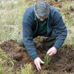 Cu prelungiri ! Termenul pentru solicitarea de ajutor financiar pentru împădurire a fost prelungit