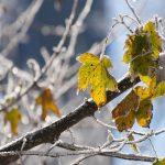 Se încălzeşte vremea ! Vezi cum va fi vremea în Maramureş în urmatoarele două săptămâni