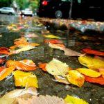 Ploi şi temperaturi scăzute ! Vezi cum va fi vremea în Maramureş, în următoarele două săptămâni