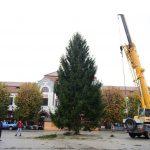 Bradul de Crăciun a ajuns în inima cetății ! A fost ales special de primarul Cătălin Cherecheș pentru băimăreni