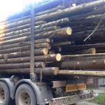 Lemnul nu se mai află în topul produselor exportate de Maramureș ! Vezi ce spune statistica