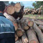 Delictele silvice din nou în atenția polițiștilor ! Amendă usturătoare pentru o firma care activează în domeniul prelucrării lemnului