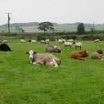 Reglementare: Liber la pășunat pe terenurile agricole