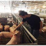 Crescătorii de animale primesc bani. Cine trebuie să ducă cererea la APIA