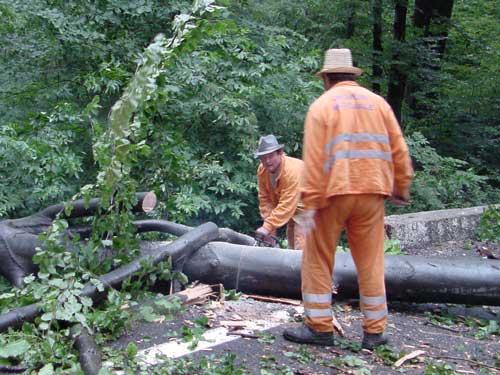 Foto: copac cazut in drum (c) eMaramures.ro