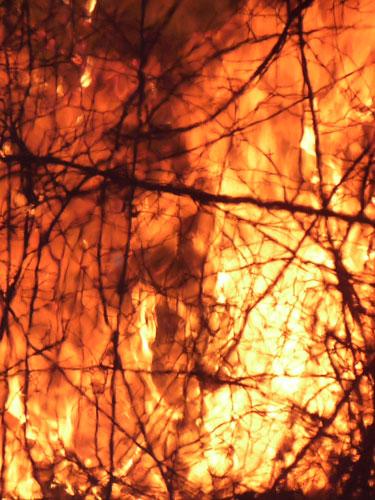Foto: incendiu vegetatie uscata
